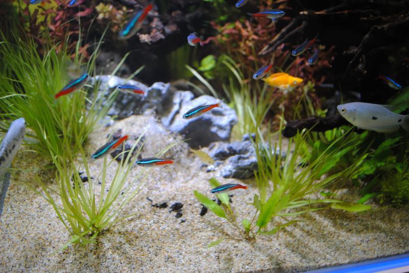 2012日本鑑賞魚フェアアクアテラリウム2