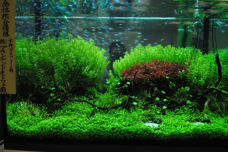 2012観賞魚フェア・アクア1