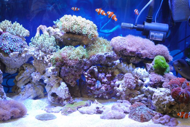 2012日本鑑賞魚フェア海水魚水槽1