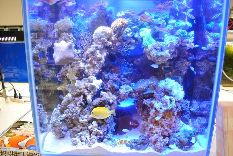 2012日本鑑賞魚フェア海水魚水槽2