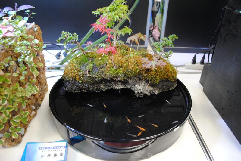 2012日本鑑賞魚フェアアクアテラリウム6