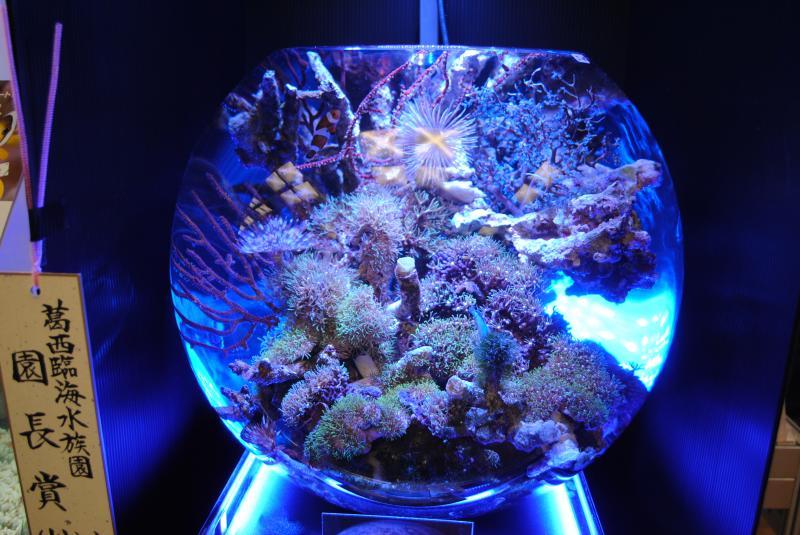 2012日本鑑賞魚フェア海水魚水槽3