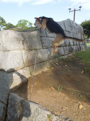 石垣ジャンプ