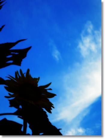 2012-09-09-01.jpg