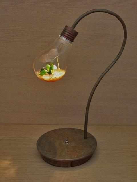 電球のテラリウム