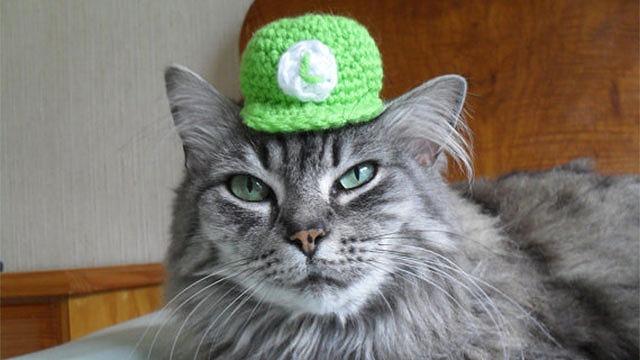 にゃん天帽子