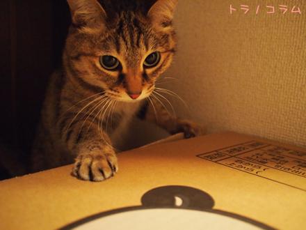 だって猫ニャンだもん