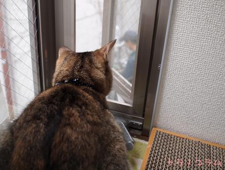 猫さんも見えないニャ。