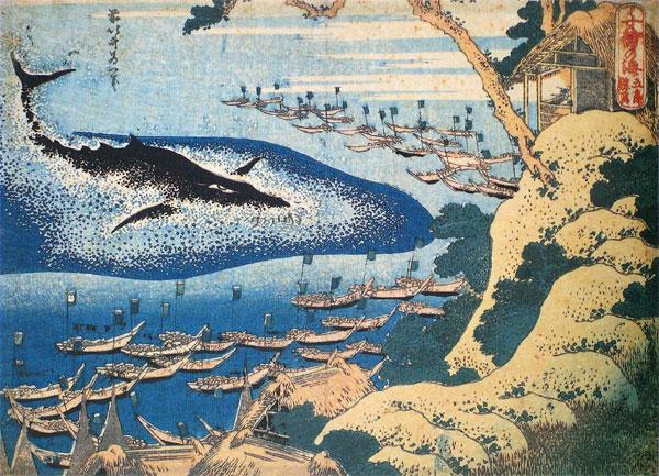 捕鯨反対の人ってなんで反対してるの?