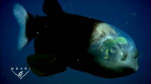 地球上の生物のほとんどが目が二つってよく考えると凄いよな