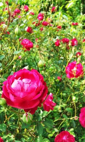 20120506akabara3.jpg