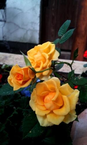20120515orenzibara2.jpg
