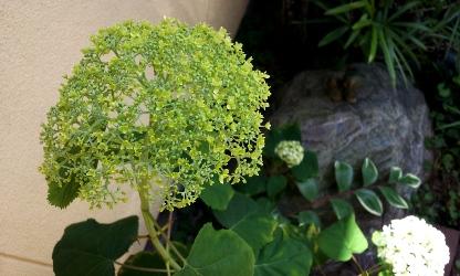 20120611anaberu.jpg