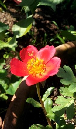 20120614po-tyuraka.jpg
