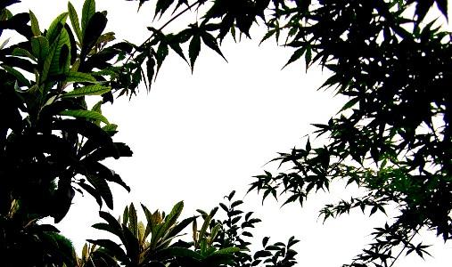20120628sora.jpg