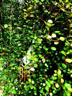 20120706waiyaplants.jpg