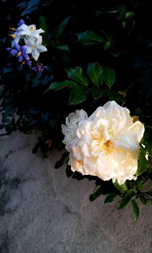 20120708turubara2.jpg