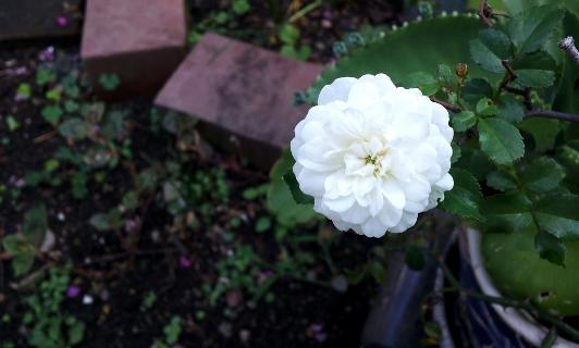 20120901minibara.jpg
