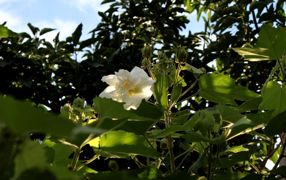 20120909suifuyousiro.jpg