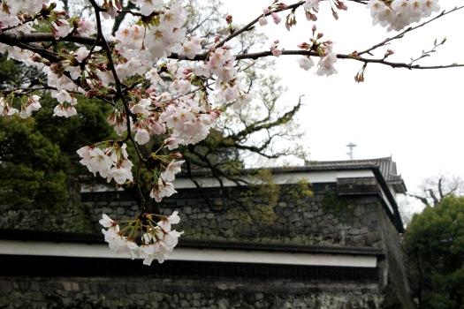 20130320sakura3.jpg