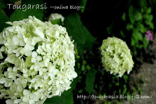 20130601anaberu-2.jpg