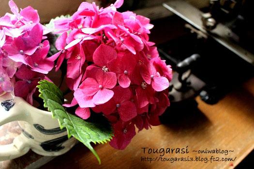 20130611azisai2-2.jpg