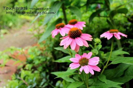 20130615ekinasea-2.jpg