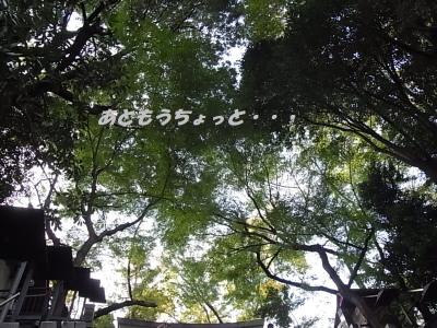 141108-3.jpg
