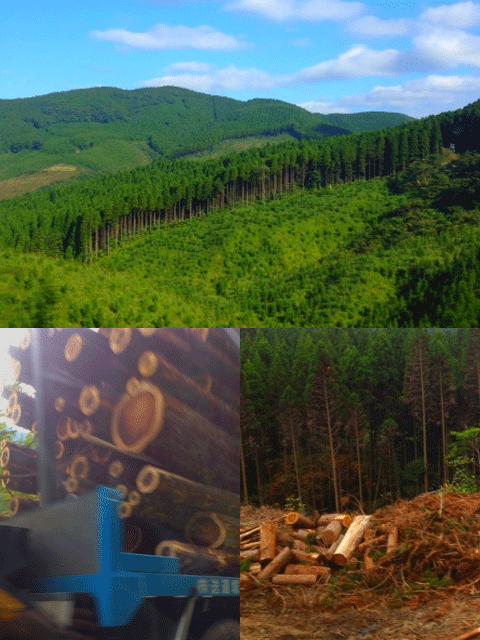 日南森林伐採