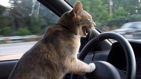 無免許運転