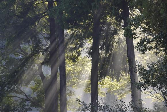 木洩れ日_R