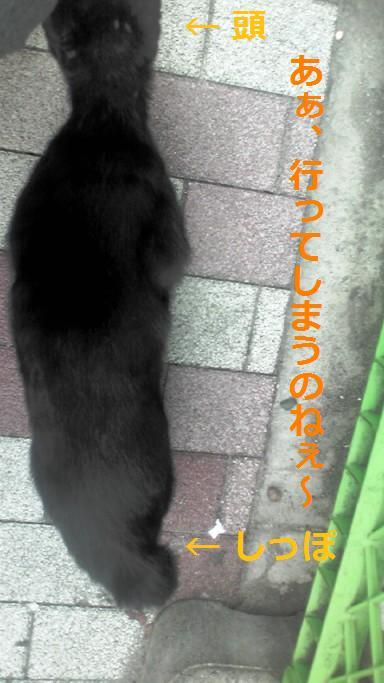 20120619_03.jpg