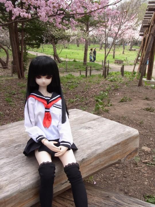 円山お花見09