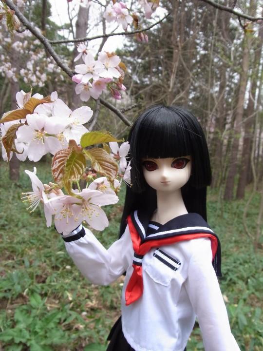 円山お花見01