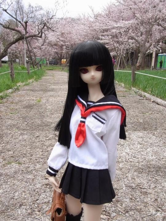 円山お花見03