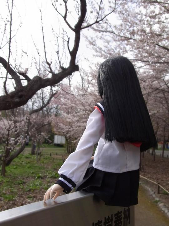 円山お花見07