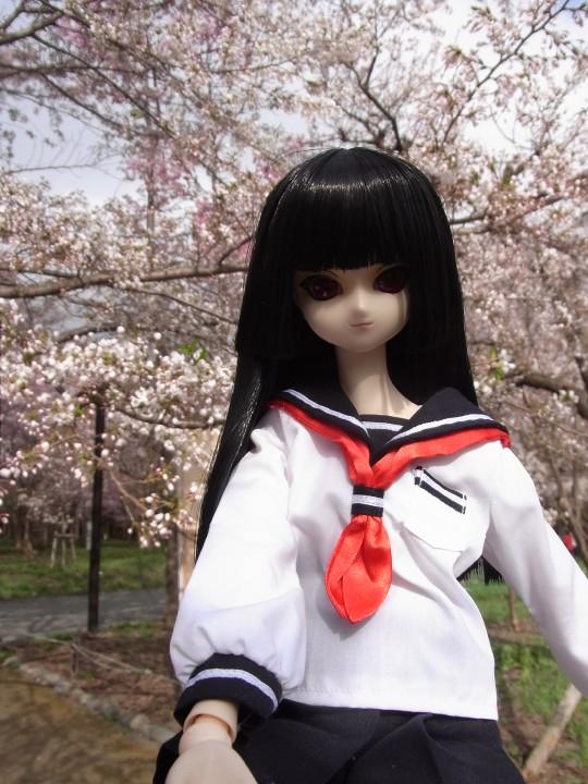 円山お花見06
