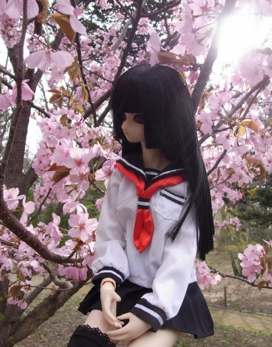 円山お花見11
