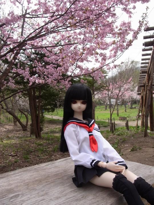 円山お花見10
