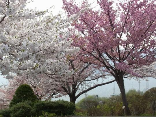 手宮緑化植物園09