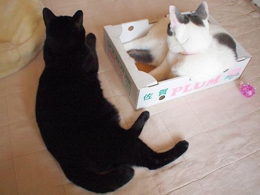 箱の側で待機してみる姫さま;