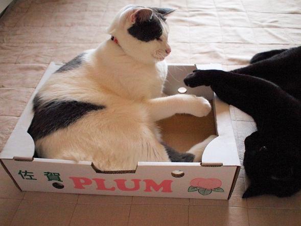 Tico vs Plum