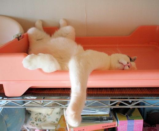 猫棚てっぺん