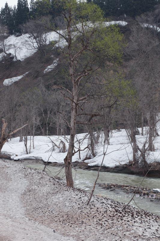 春の松之山