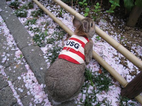桜の花びらも、いっぱいだね~