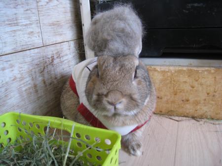 私の耳はどこ?