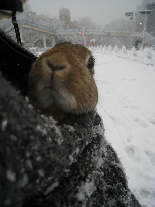 くんくん、雪の匂いがする