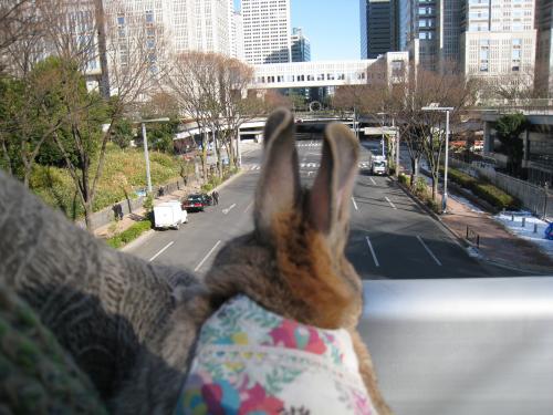 新宿中央公園から