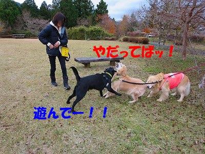 IMG_4388.jpg