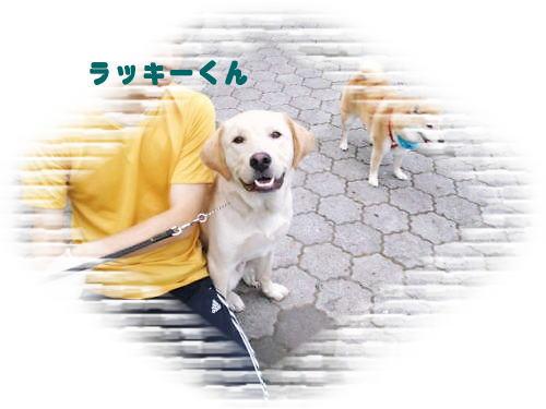 2012長岡公園596
